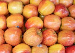 galla apples 5