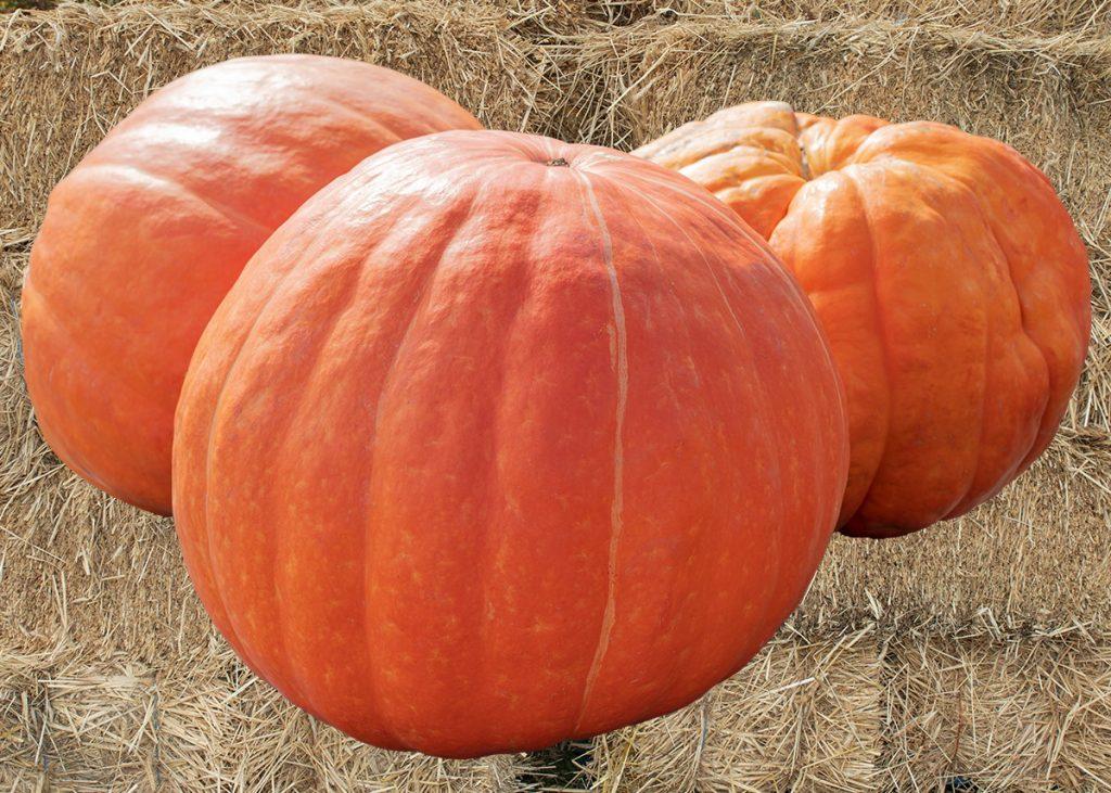 Fiorentino's Farm Market Halloween & Fall Decor in Hammonton NJ
