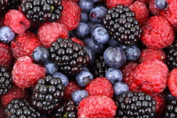 Fiorentino's Farm Market Long Lasting Produce Storage Tips Berries