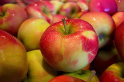 Fiorentino's Farm Market Easy Fall Apple Recipes